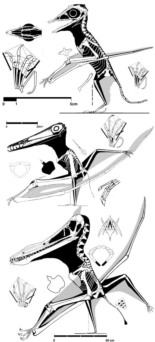 Arthurdactylus