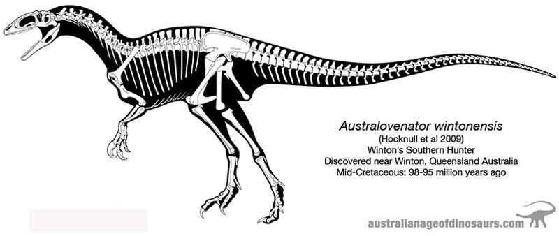 Australovenator