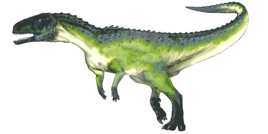 Austrocheirus