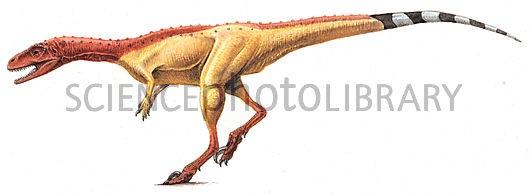Resultado de imagen de noasaurus