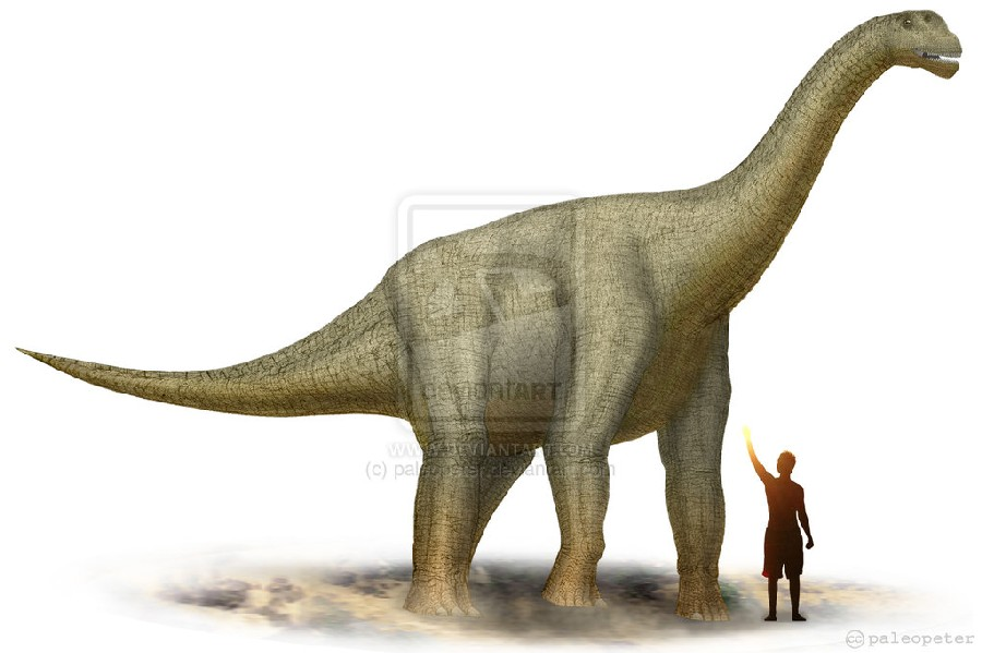 Camarasaurus Pictures   Facts - The Dinosaur Database 68a7953523ef