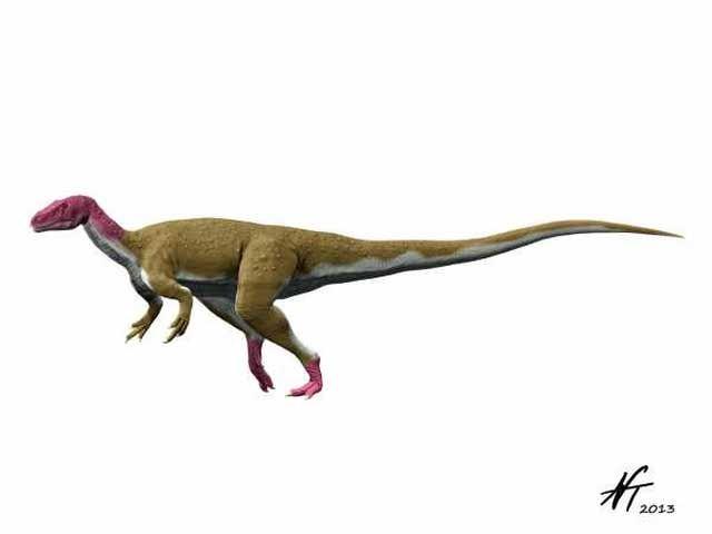 Camarillasaurus