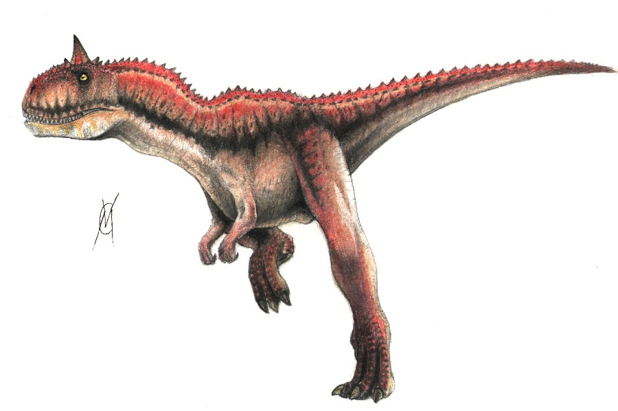 Carnotaurus Pictures Amp Facts