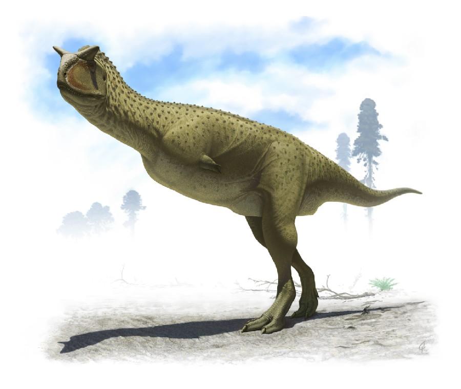 carnotaurus_355f.jpg