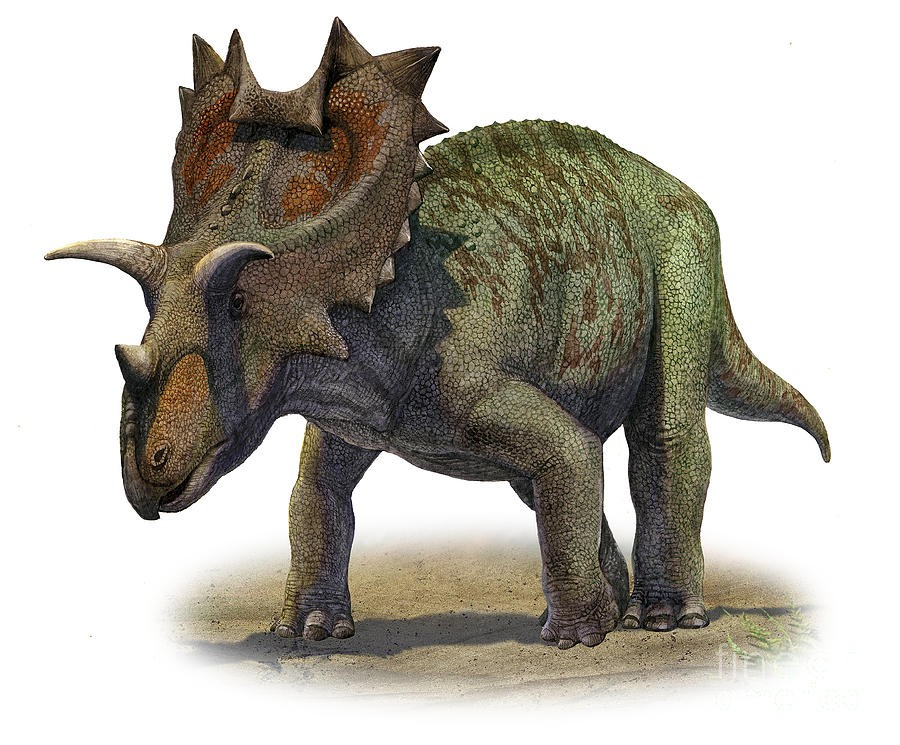 Ceratops Pictures Amp Facts The Dinosaur Database