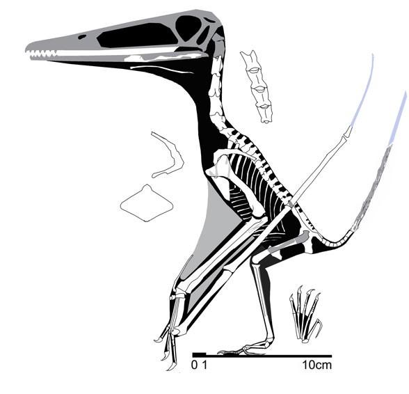 Changchengopterus