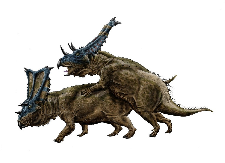 Chasmosaurus