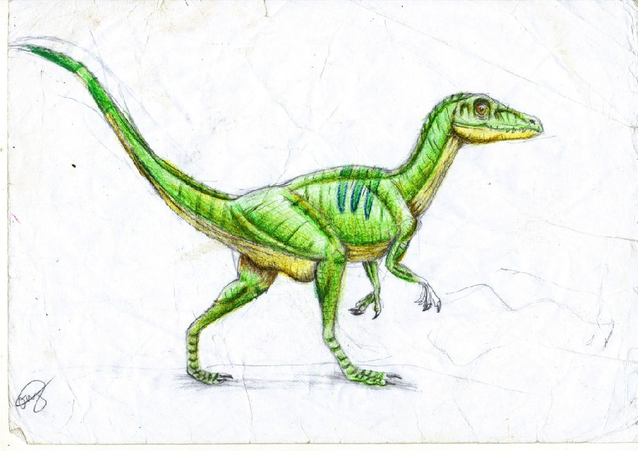 a physical analysis predatory instinct and food of the small dinosaur the compsognathus