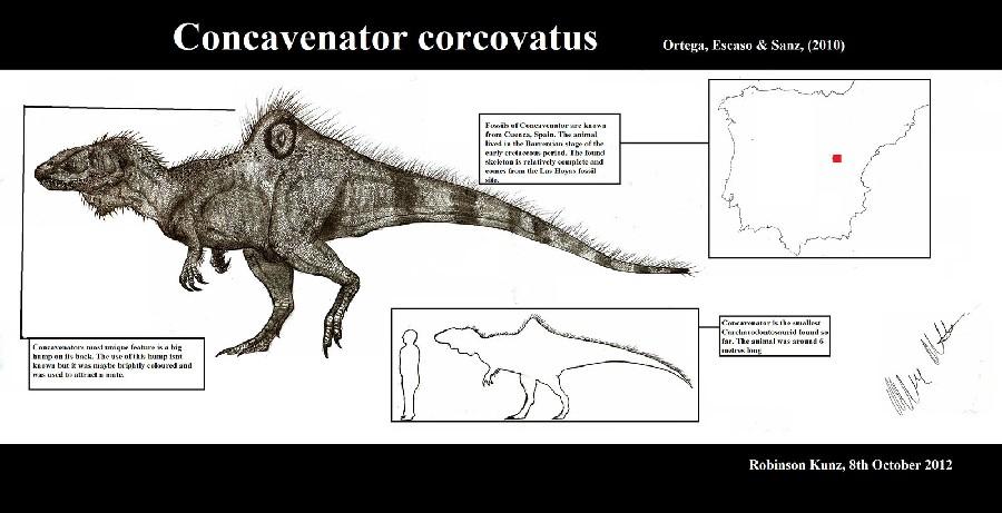 concavenator pictures amp facts the dinosaur database
