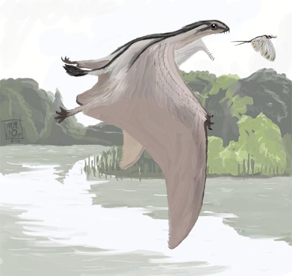 Dendrorhynchoides