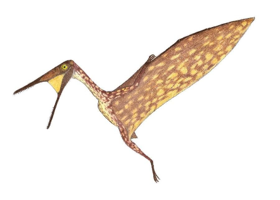 Dermodactylus