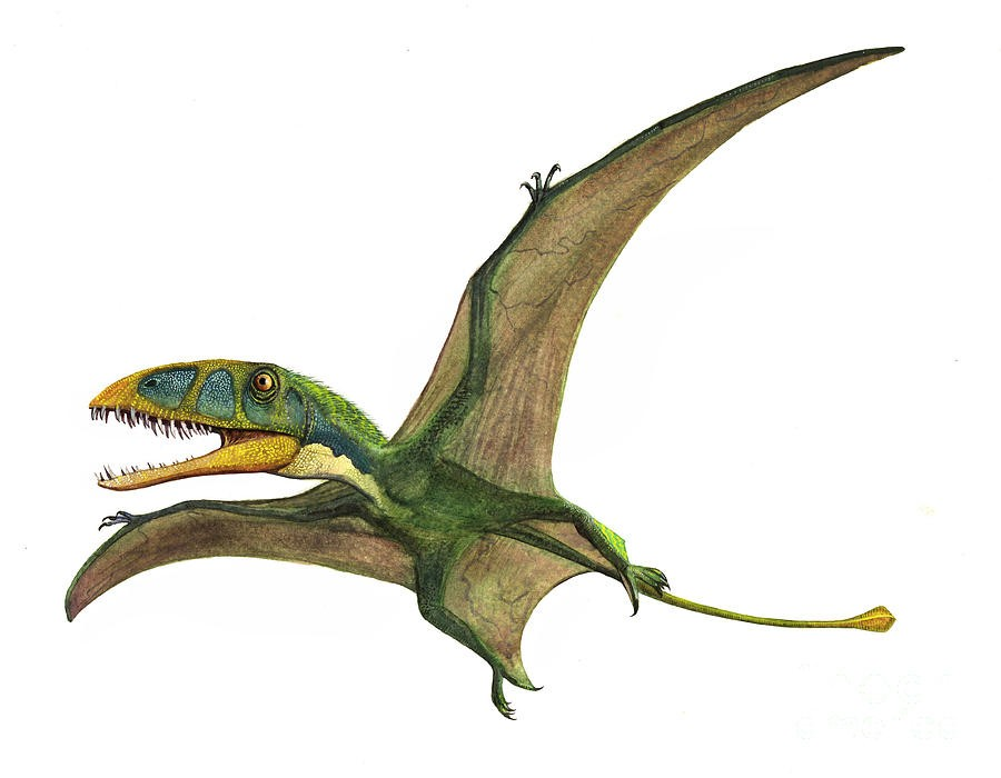 Dimorphodon Pictures Amp Facts
