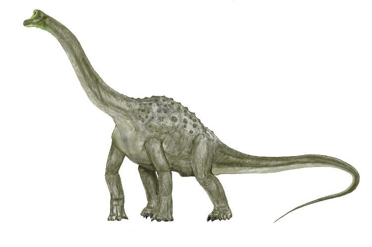 http://images.dinosaurpictures.org/dinosaurios-a-andesaurus_0001_8f0a.jpg