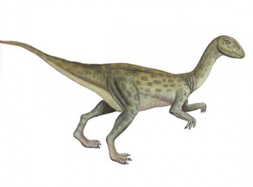 Fulgurotherium pictures facts the dinosaur database - Liste dinosaures ...