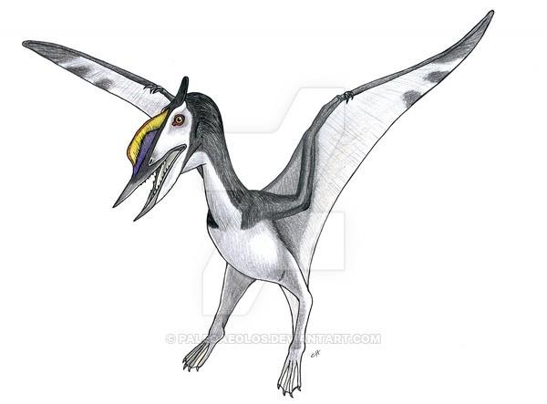 Domeykodactylus