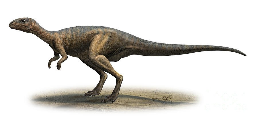 Dryosaurus Pictures Amp Facts The Dinosaur Database