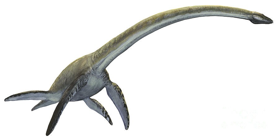 Elasmosaurus Pictures Amp Facts