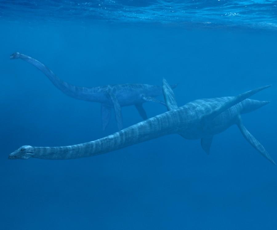 elasmosaurus pictures facts the dinosaur database