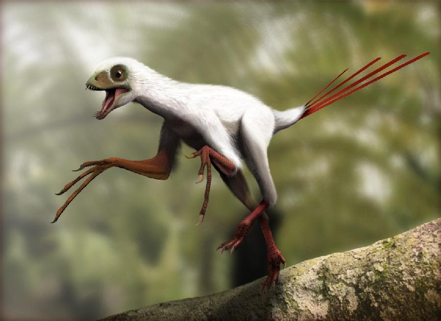 epidexipteryx_7303.jpg