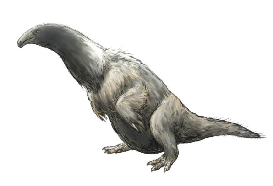 Erliansaurus