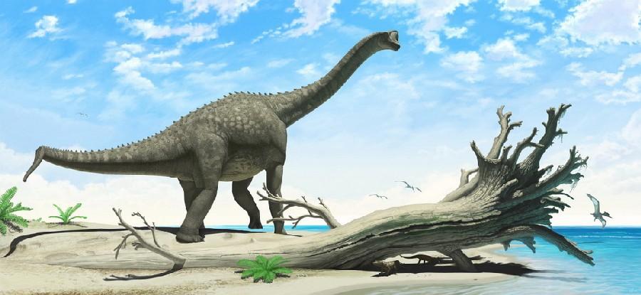 Europasaurus