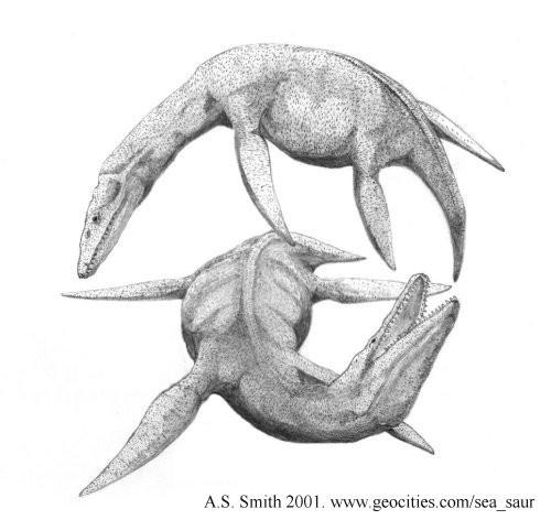 Eurycleidus