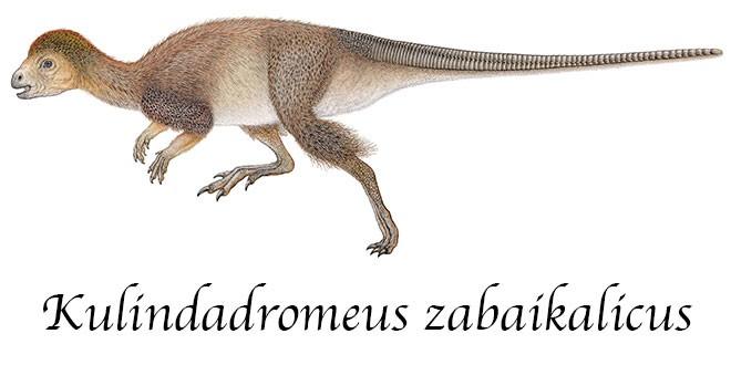 Kulindadromeus