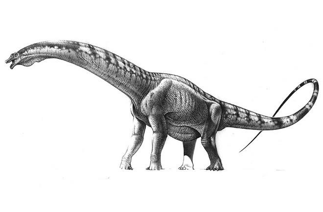 Resultado de imagen para futalognkosaurus