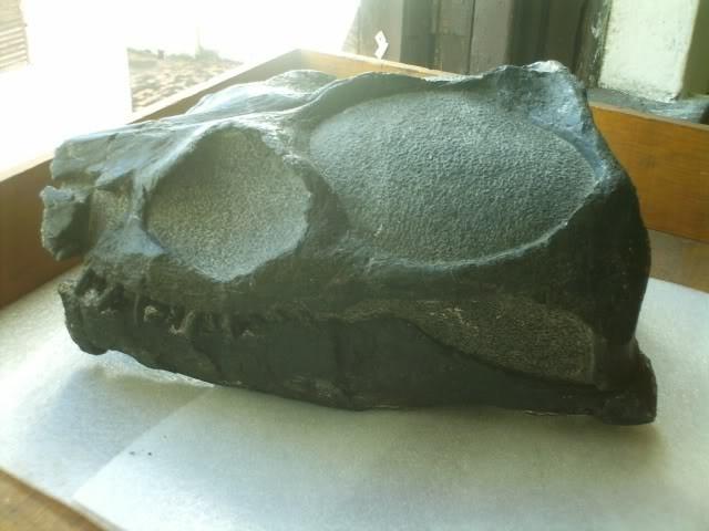 Gallardosaurus