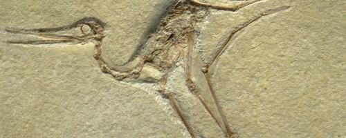 Gnathosaurus