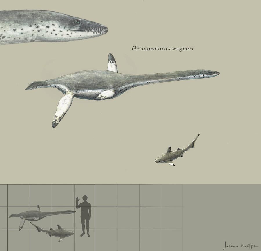 Gronausaurus