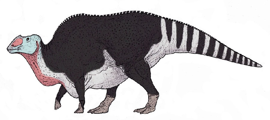 Image result for Gryposaurus