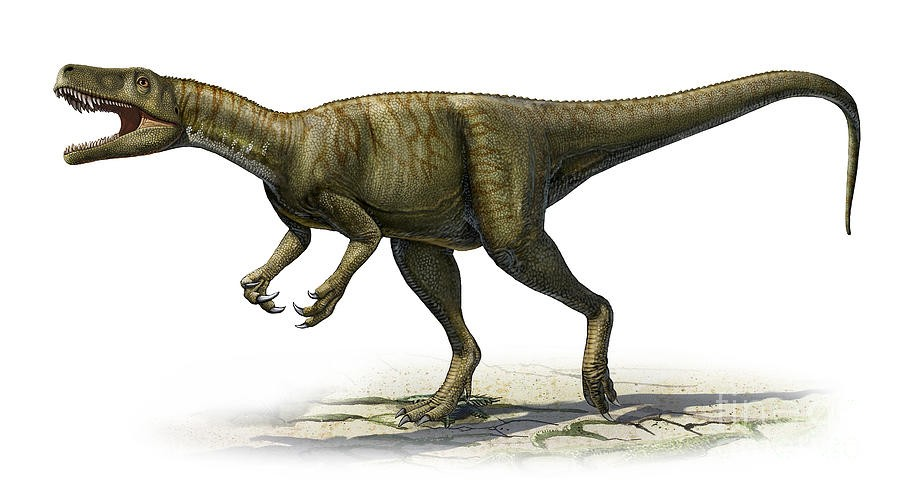 Herrerasaurus Pictures Facts The Dinosaur Database