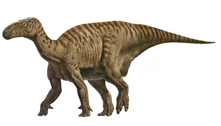 Iguanodon Pictures & Facts - The Dinosaur Database