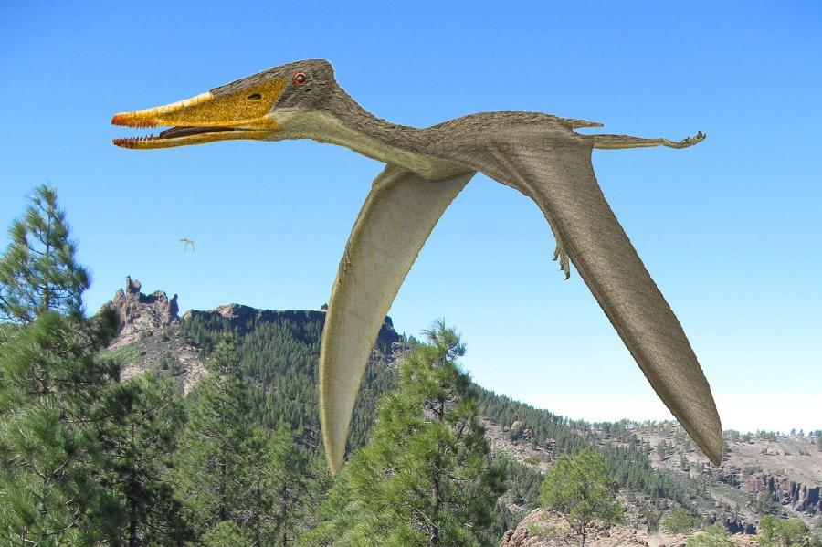 Istiodactylus