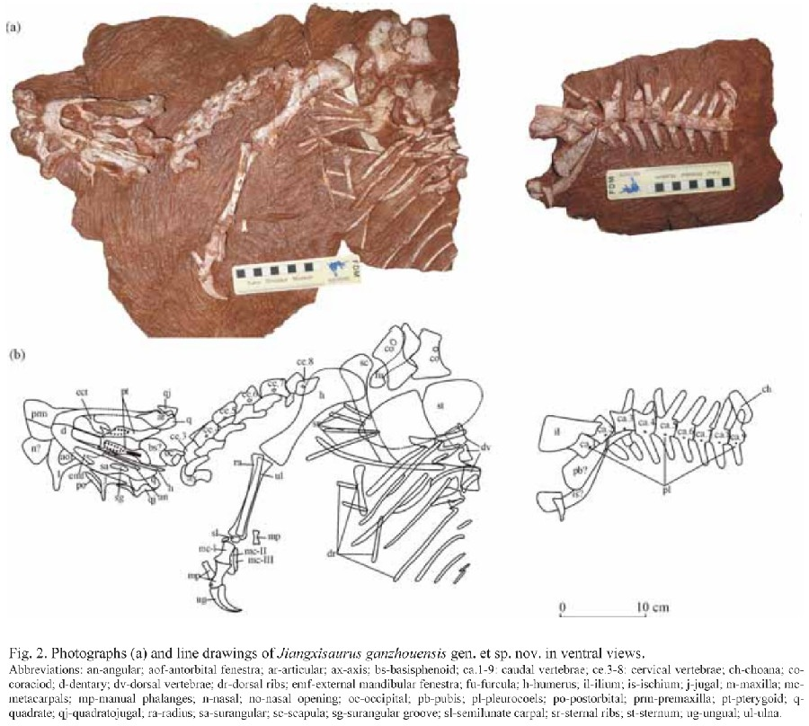 Jiangxisaurus
