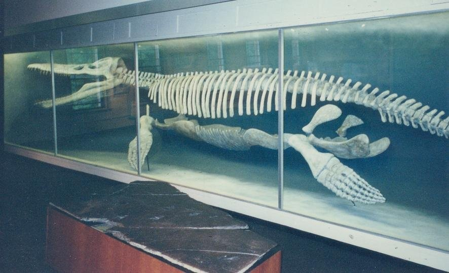 Kronosaurus Pictures amp Facts