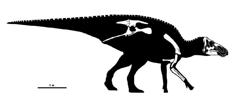 Kundurosaurus