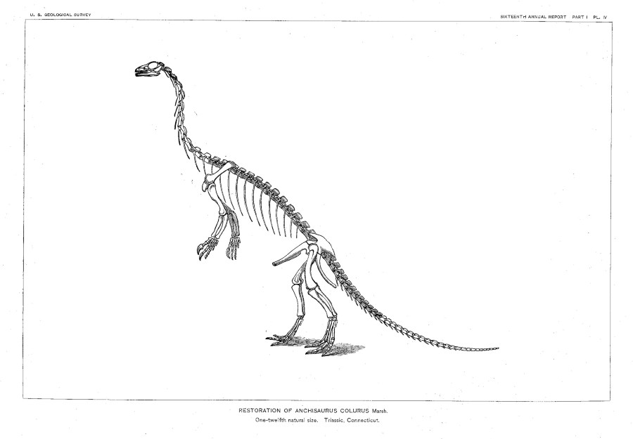Anchisaurus
