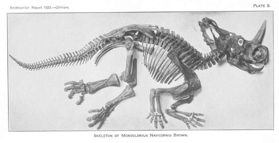 Monoclonius