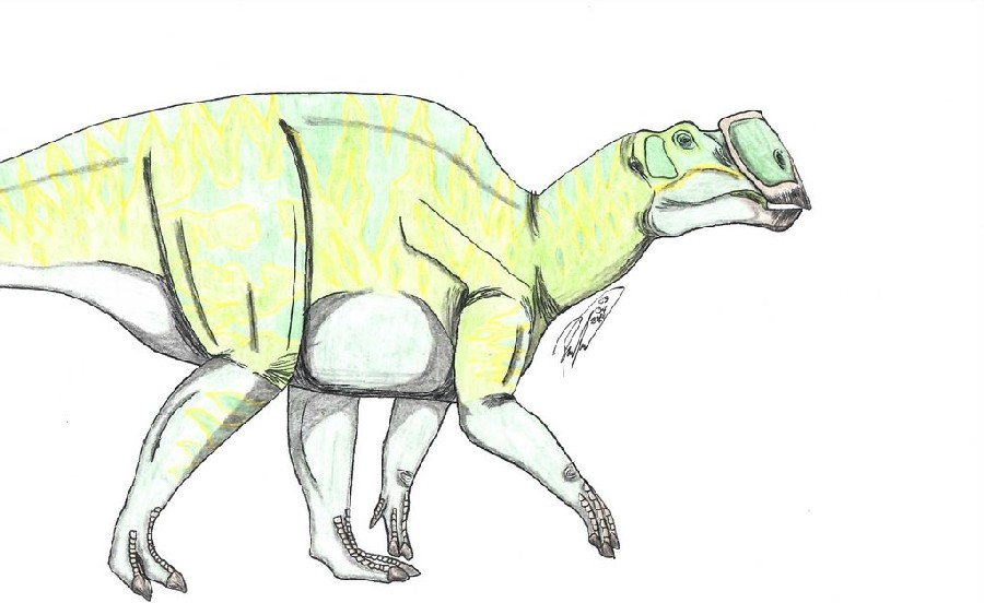 Latirhinus