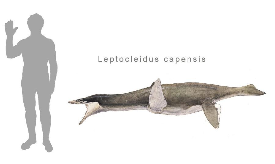 Leptocleidus