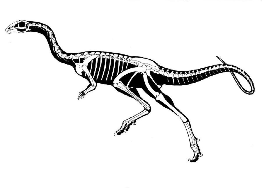 Limusaurus