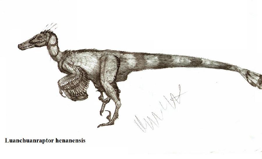 Luanchuanraptor
