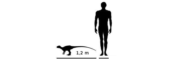 Resultado de imagen de lycorhinus