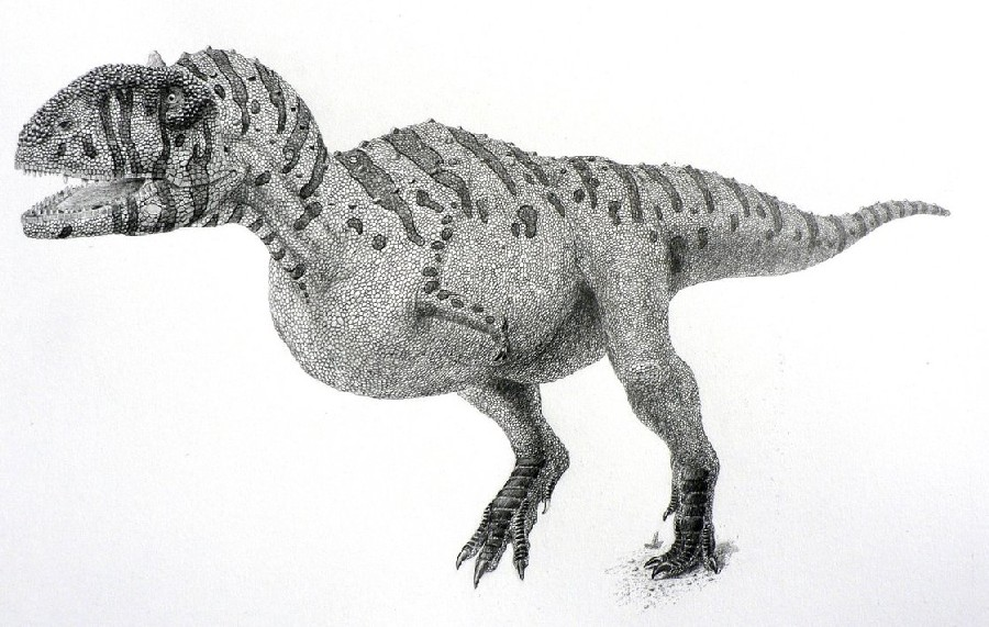 Majungasaurus Pictures Amp Facts The Dinosaur Database