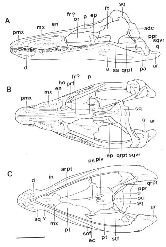 Maresaurus