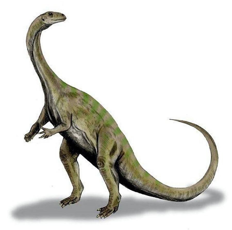 http://images.dinosaurpictures.org/massospondylus_599e.jpg