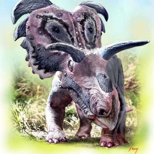 Medusaceratops