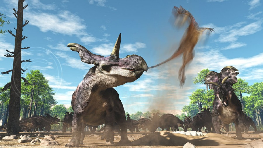 Medusaceratops Pictures Facts The Dinosaur Database